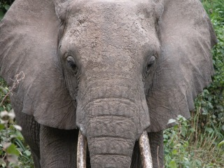 Is behaviour the elephant in the room?